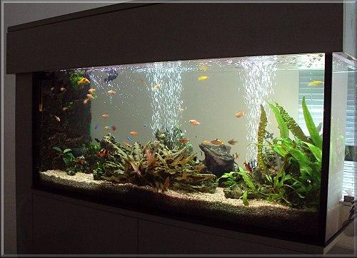 Realizace akvárií na míru