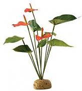 Anthurium Bush 30 cm