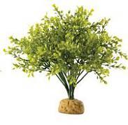 Boxwood Bush 27 cm