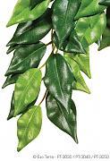 Rostlina textilní Ficus